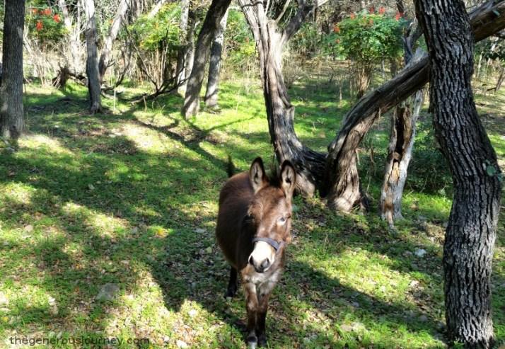 Donkey © Paul H. Byerly