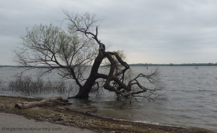Tree in lake © Lori J. Byerly