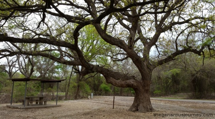 Oak Tree © Paul H. Byerly
