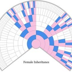 Heredity Family Tree Diagram Yamaha R6 Wiring Unlocking The Genealogical Secrets Of X Chromosome