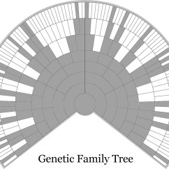 Heredity Family Tree Diagram 2000 S10 Wiring Q Anda Everyone Has Two Trees  A Genealogical