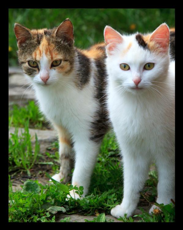Bonita Springs Cat-Sitter