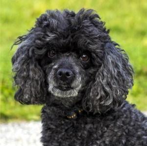Victoria is Naples dog-sitter.