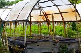 Mr. Green Deans Veggie Garden