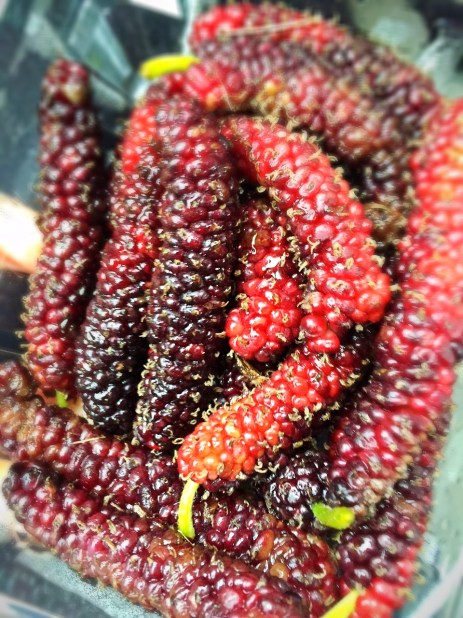 Pencil Mulberries from Bee Heaven Farms