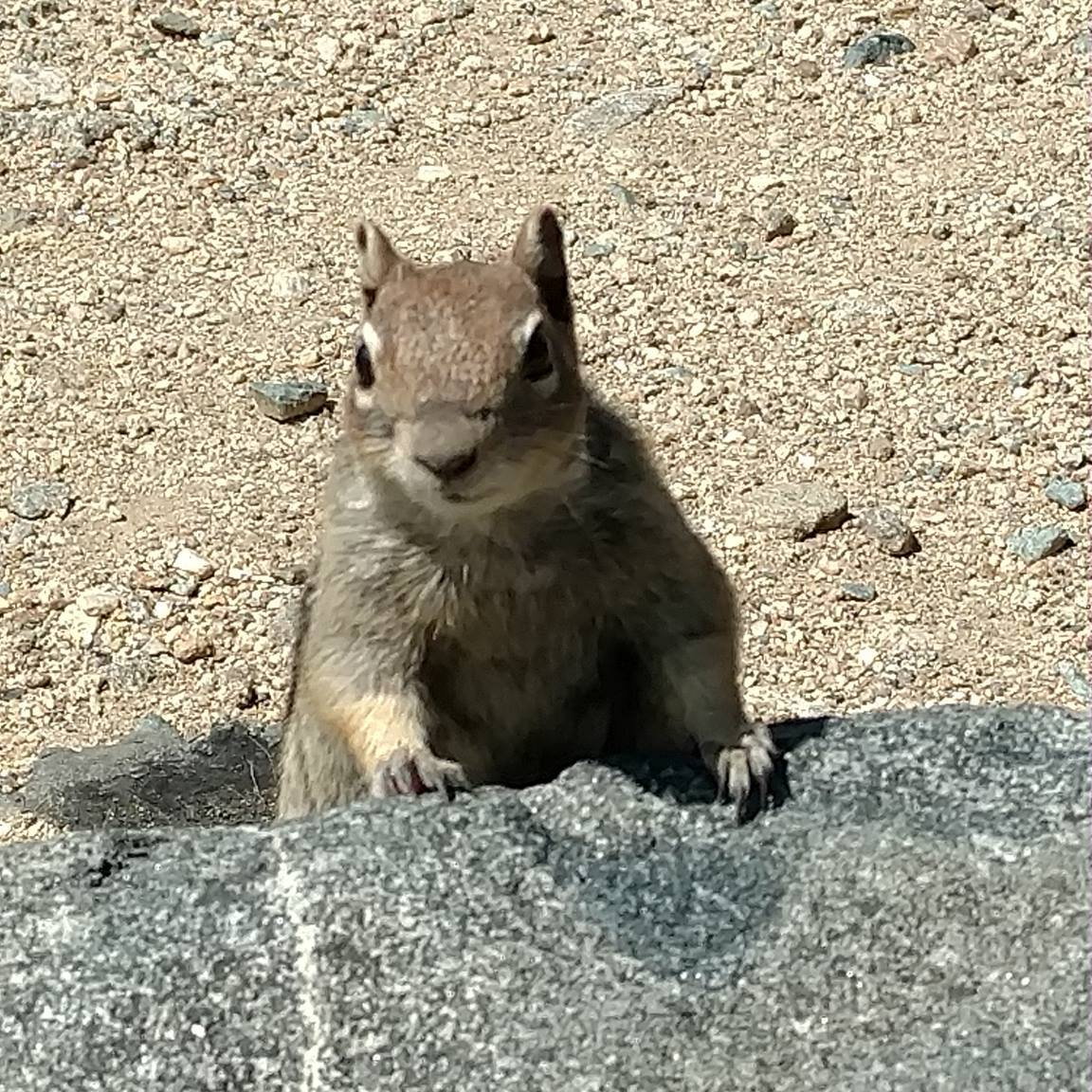 squirrel at Saint Mary's Glacier