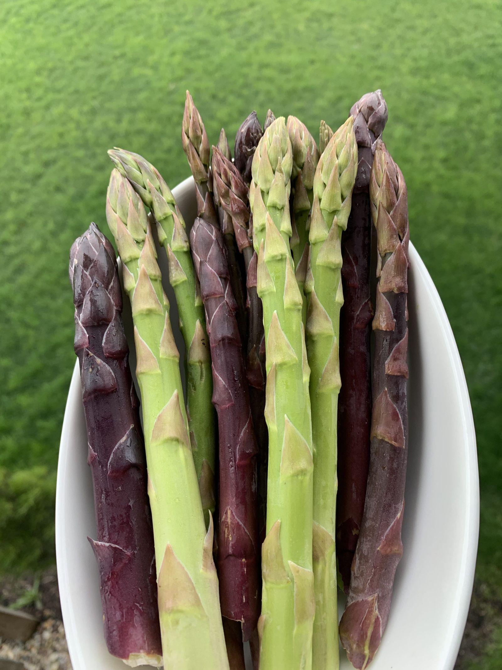 Grow asparagus in your garden