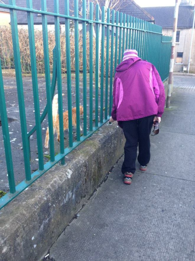 The_Mother enlists a ginger kitty to help find a cache in Drogheda, County Louth