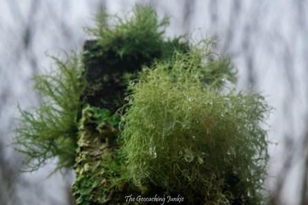 Glengarra Wood lichen