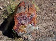 #2 Fossilized wood