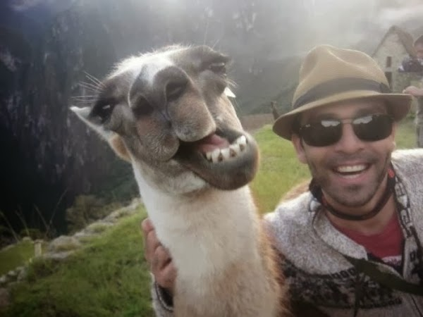 funny-animal-selfie