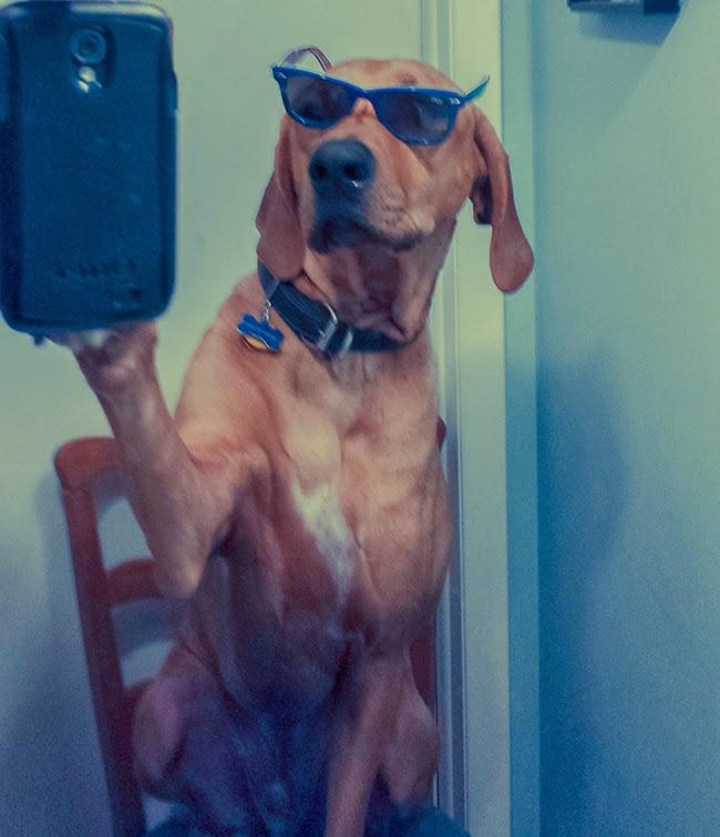 komik-selfie-pozlari-15-kopek-poz-verirse