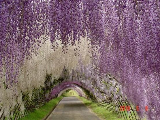 Çiçekli Yol Manzara