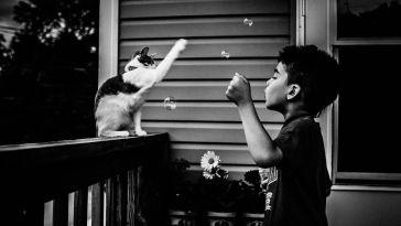 balonla oynayan kedi