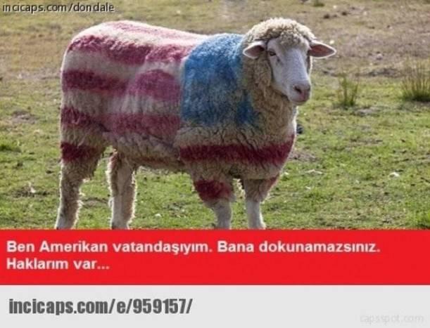 kurbanlik_'caps'ler!_(1)_388678280542942b11c407