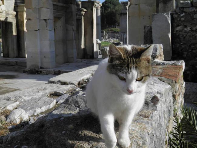 Efes Türkiye'den Kedi