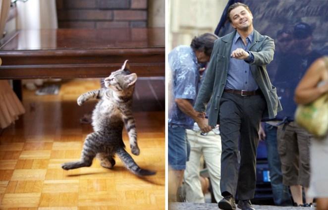 Leonardo DiCaprio'ya benzeyen kedi