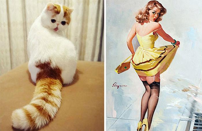 Pin Up Kızlarına Benzeyen Kedi