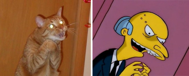 Simpsons'tan Mr Burns'e benzeyen kedi