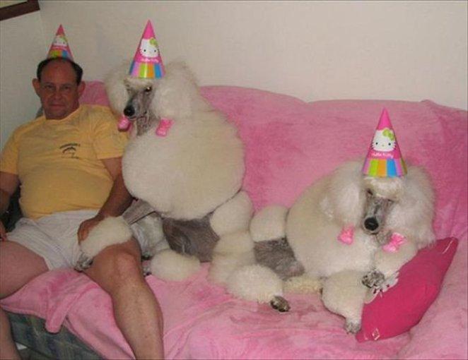 kutlama yapan köpekler bu kimin doğum günü :)