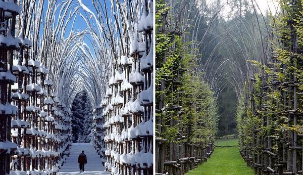 Ağaç katedral3