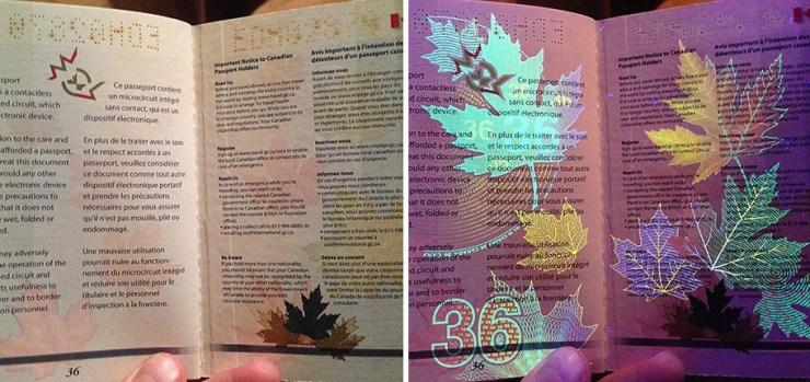 Kanada Pasaportu541