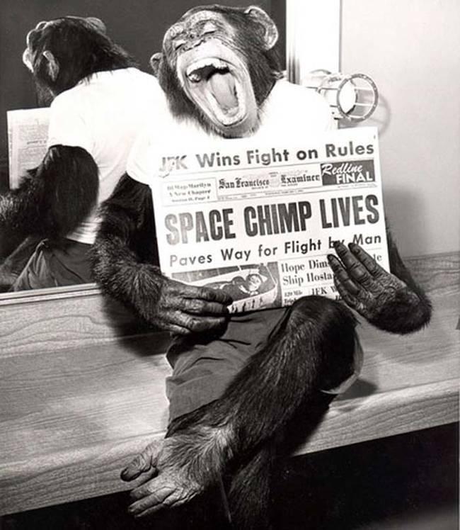 uzaydan dönen maymun