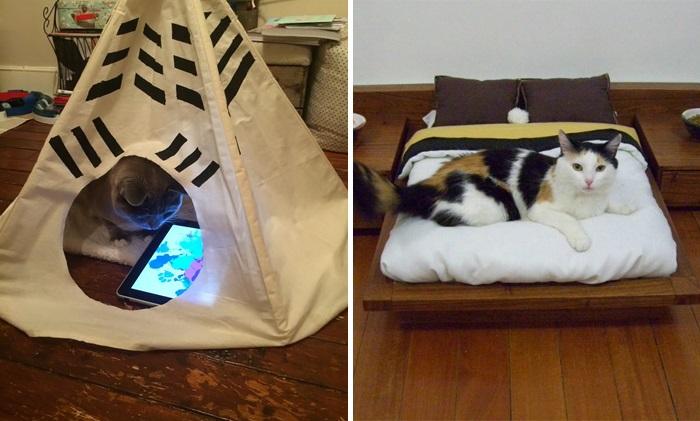 zengin kediler