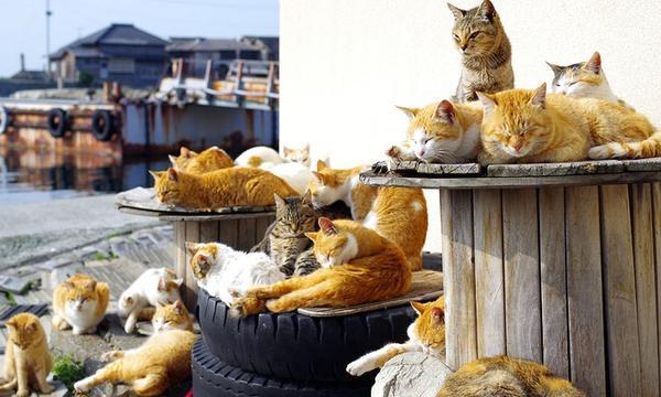 Tashirojima kedi adası