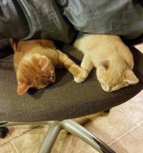 sevgili kediler