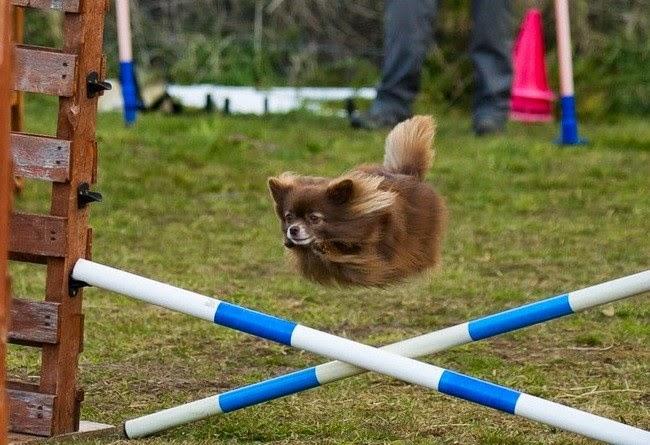İlginç köpek resimleri 14