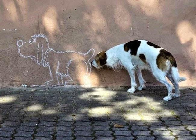 İlginç köpek resimleri 2