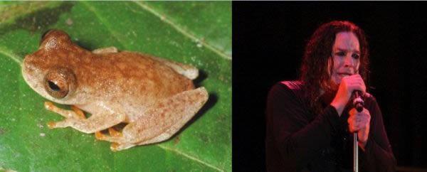 Dendropsophus ozzyi
