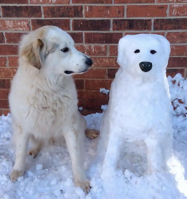 Kardan hayvanlar-5