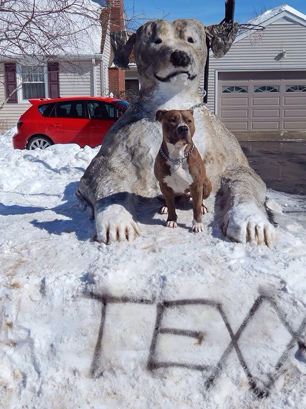Kardan hayvanlar-9