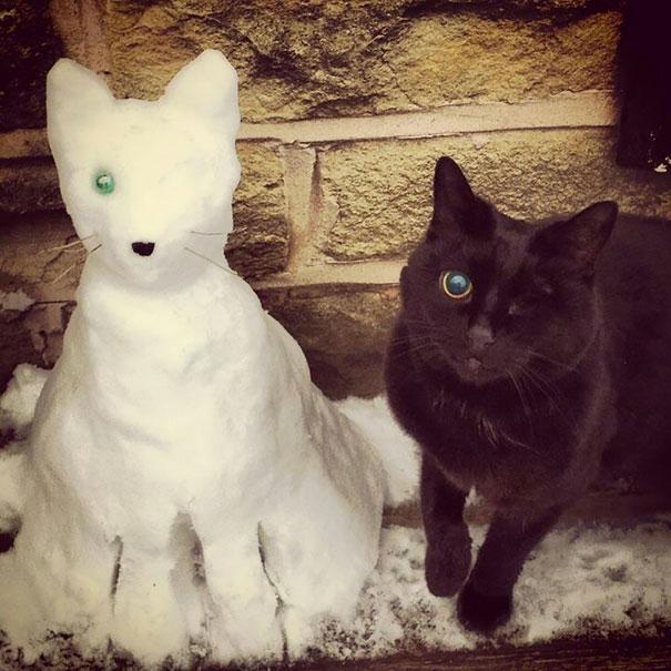 Kardan hayvanlar