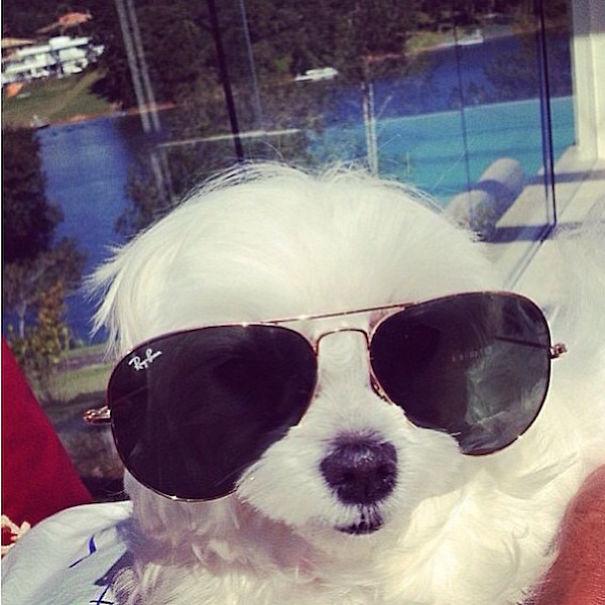 instagram zengin köpek