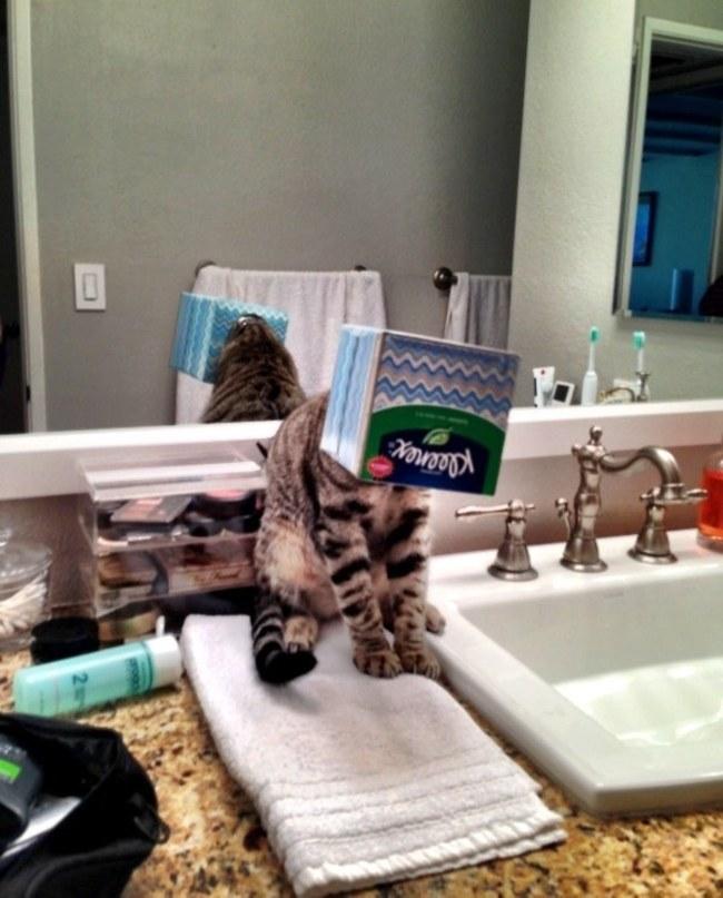 komik kedi