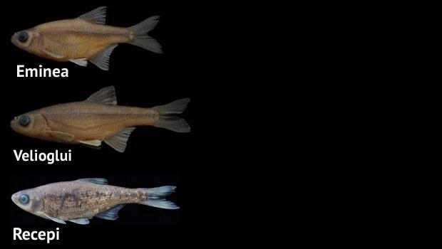 rte balık