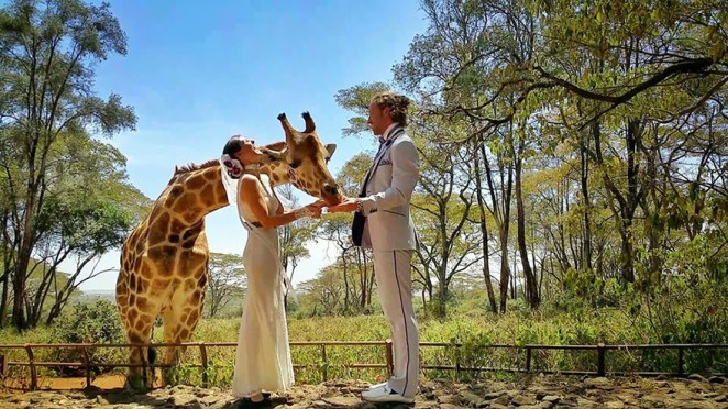 zürafa merkezi Nairobi