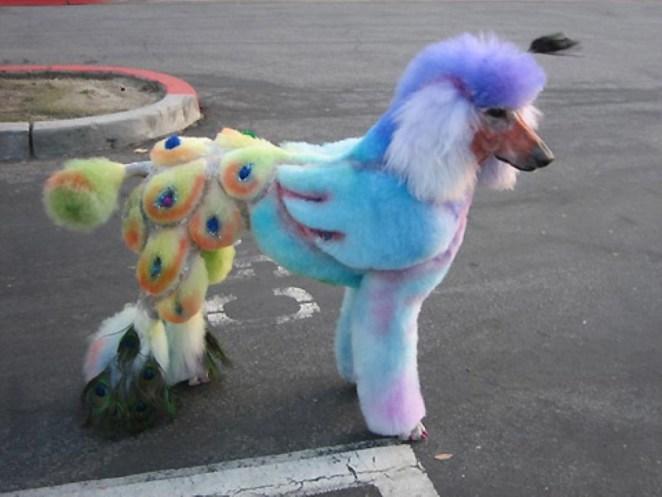 komik köpek saç