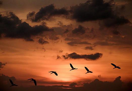uçan kuşlar