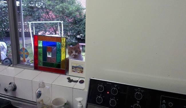 Lütfen beni içeri al diyen kediler 5