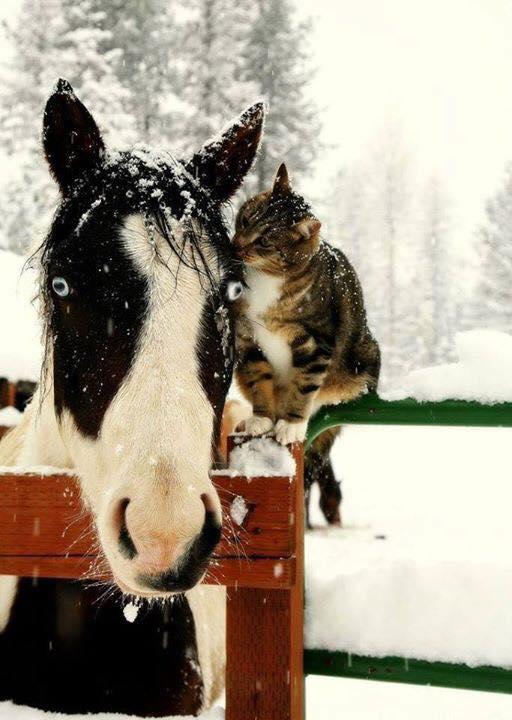 kedi at