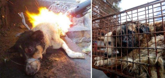 Yulin köpek yeme festivali 3
