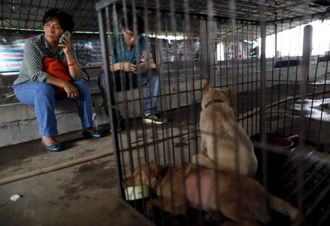 Yulin köpek yeme festivali 5