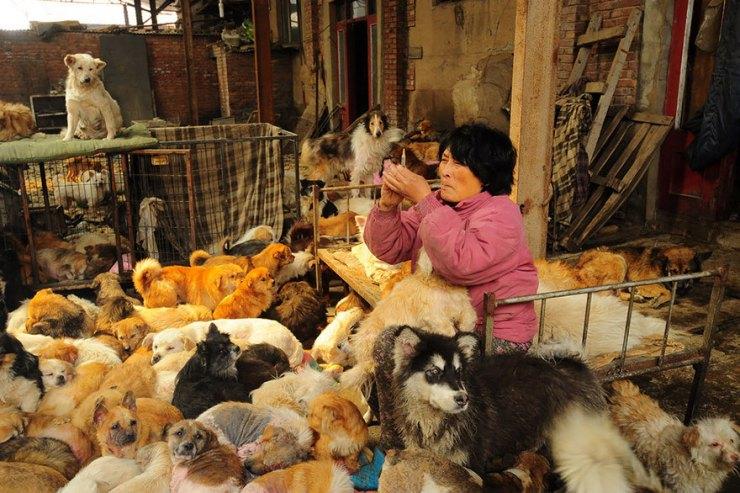 Yulin köpek yeme festivali 6