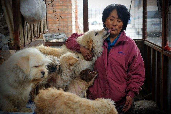 Yulin köpek yeme festivali