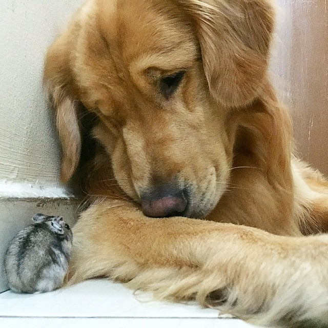 köpekhamsterdostluğu