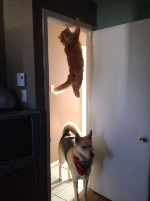 kedi köpek atak